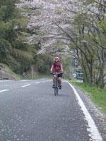 桜吹雪の宇津ノ谷峠