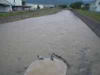 増水した庵原川