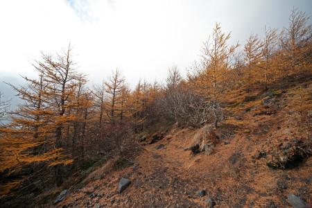 林間の道へ