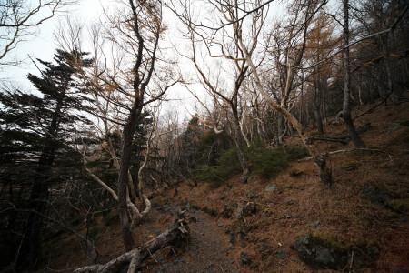 林間の道を進む