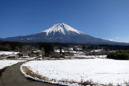 牧草地と富士山