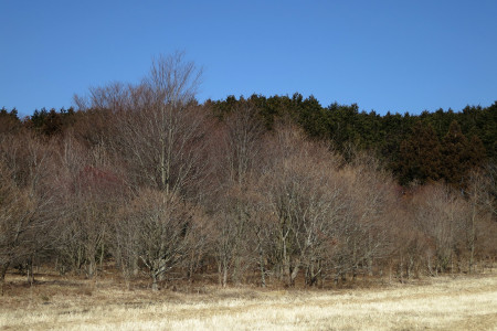 木々も春の準備