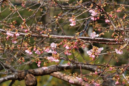 原木の枝と花