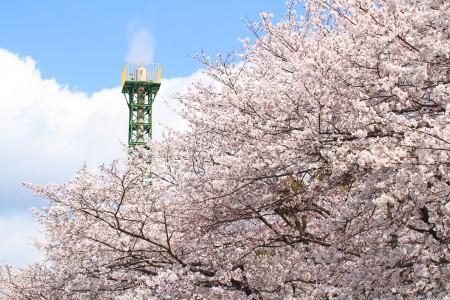 龍厳淵の桜と煙突