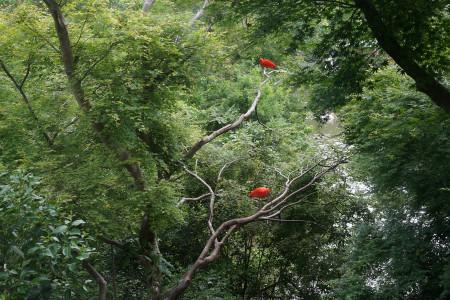 真っ赤な色が特徴的なショウジョウトキ
