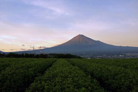 お茶畑と富士山の夕景