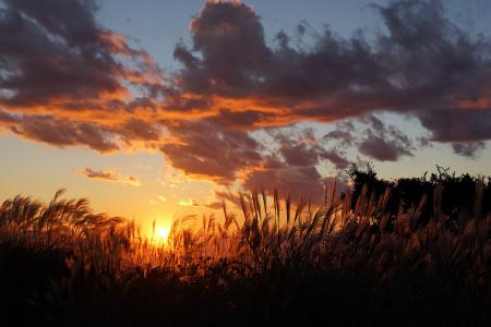ススキと夕陽