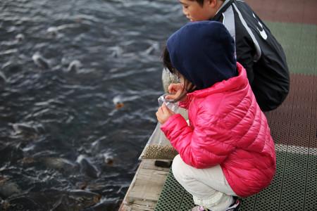 鯉の餌を準備