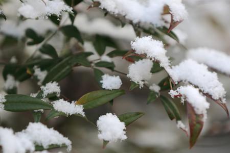 木々にも雪が