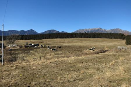 牧草地と乳牛