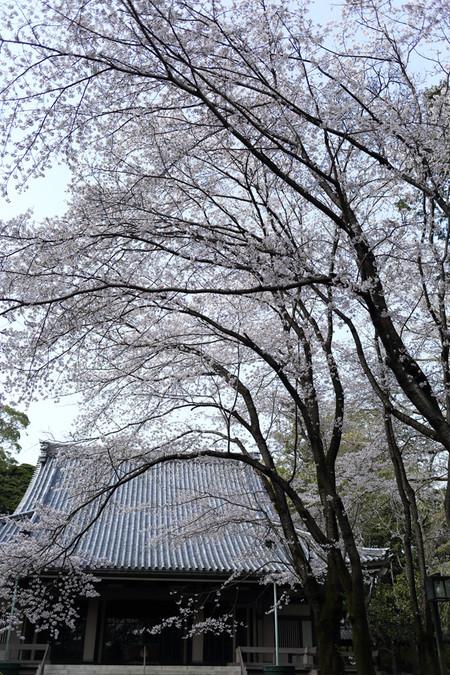 境内の大木(縦)