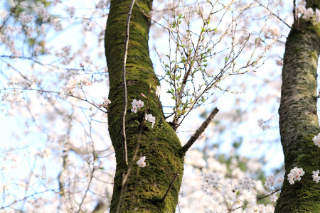 大木の豊かな表情