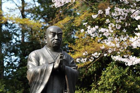 日蓮大聖人も桜を愛でる