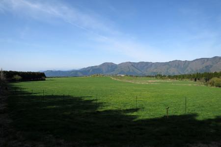 広見の牧草地