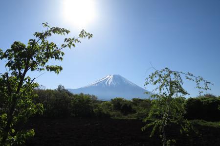 新緑と富士山と朝日