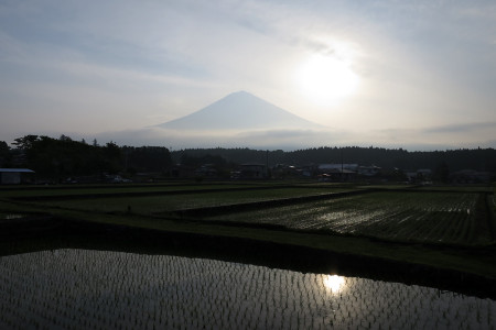 水田と富士山と朝日
