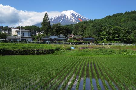 富士山の農鳥と水田
