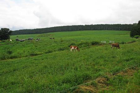 牧草地を走る