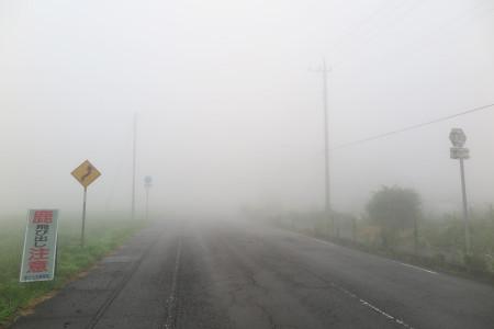 霧の朝霧高原