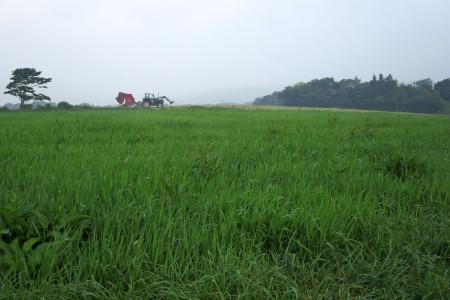 牧草地帯を進む