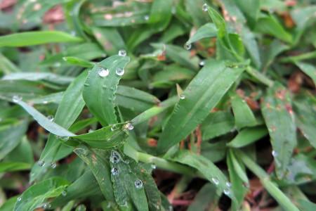 草につく水玉