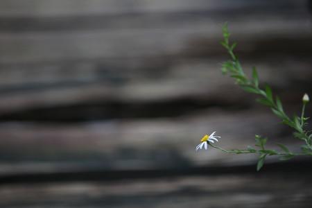 小さな秋の草花