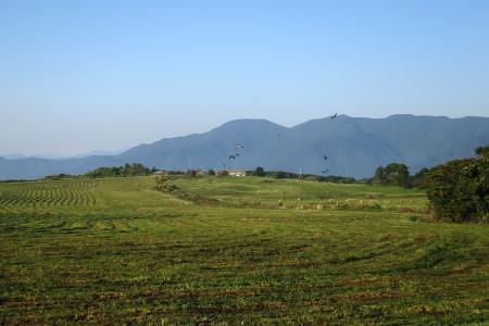 牧草刈り取り後の牧草地