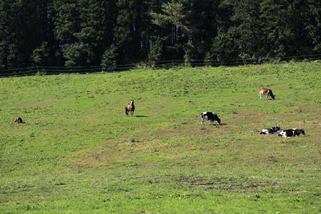 牛馬混合の牧草地