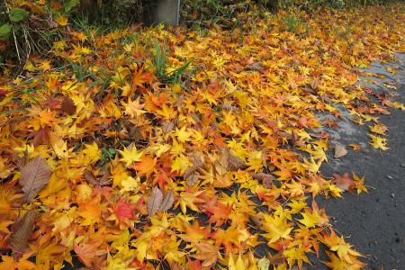 色鮮やかな落ち葉