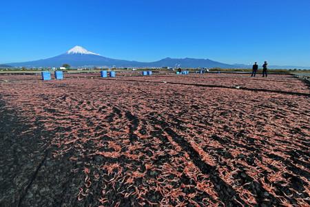 桜えびと富士山