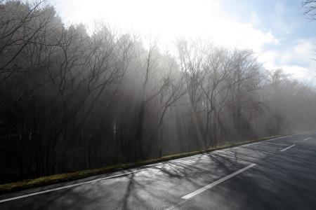 陽射しが幻想的な光景