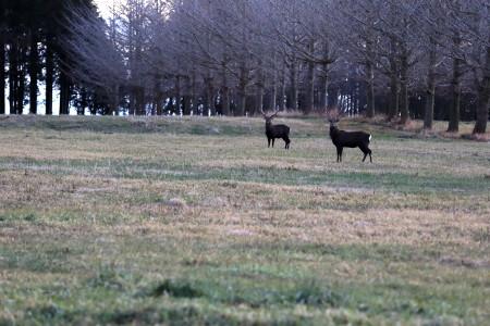 牧草地の奥に