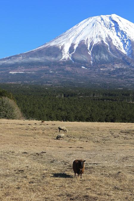 羊と富士山