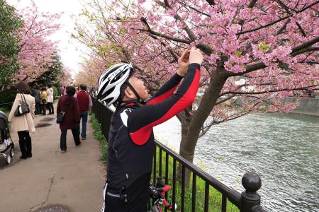 河津桜を撮るSさんを撮る