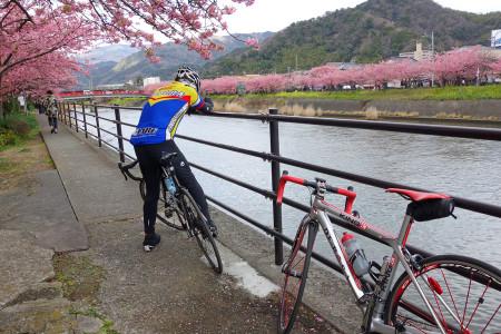 河津桜を撮る私を撮る