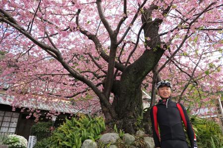 河津桜原木とSさん