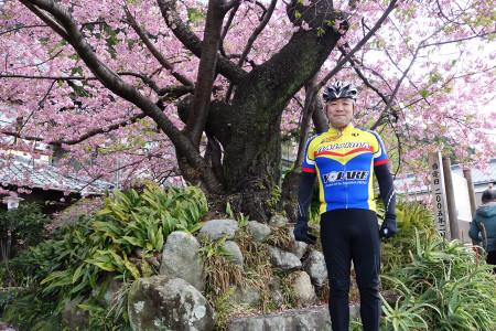 河津桜原木と私
