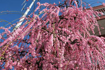 春へと戻る