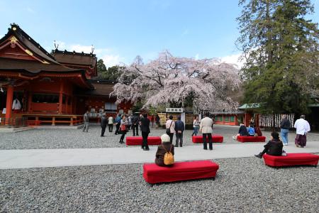 枝垂れ桜を愛でる人々