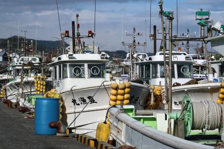 由比漁港の桜えび漁船