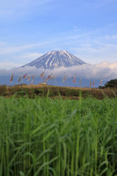 朝霧さわやかパーキングからの鯉のぼりと富士山