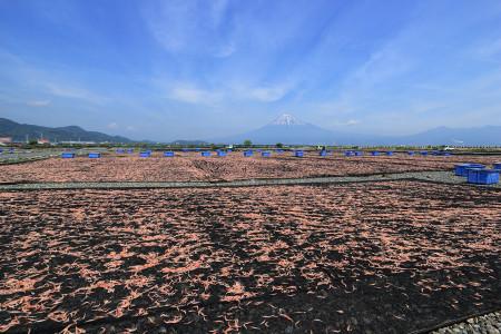 富士川河川敷の桜えび干し光景