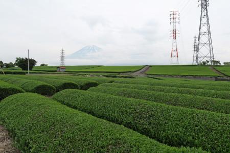 お茶畑越しの富士山
