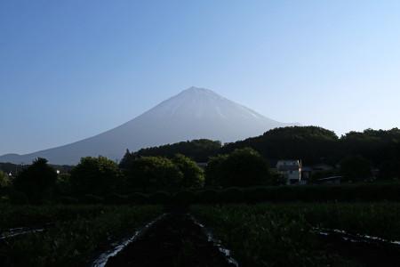 5月21日の富士山