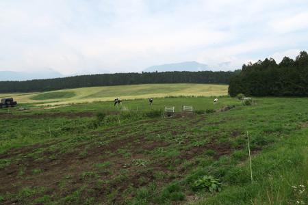 人穴の牧草地