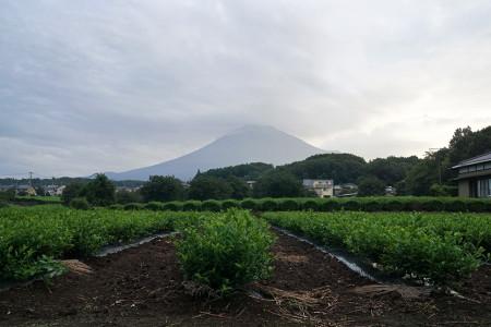 9月3日朝の富士山
