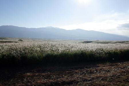 広大なススキ野原