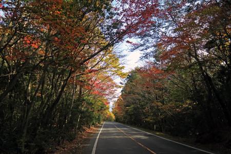 県道71号沿いの紅葉
