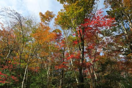 西湖付近の紅葉