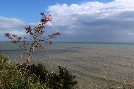 薩た峠からの駿河湾